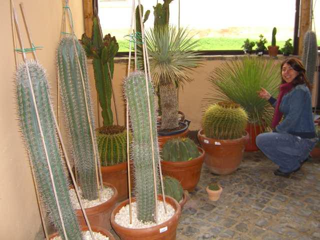 Piante grasse vivaio cactacee succulente pianta grassa for Piante grasse da casa