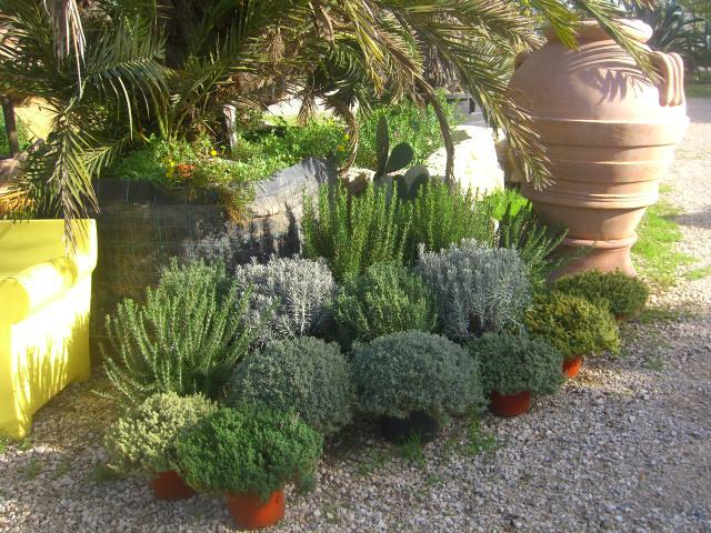 Piante Aromatiche Perenni Elenco : Presso l escusivo vivaio centro giardinaggio punto