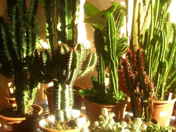 Presso l 39 escusivo vivaio centro giardinaggio punto - Le piante grasse si possono tenere in casa ...