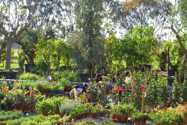 Presso l 39 escusivo vivaio centro giardinaggio punto for Vivaio alberi